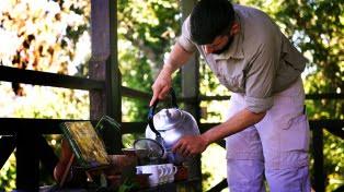 Argentina logró la apertura del mercado indio para la yerba mate